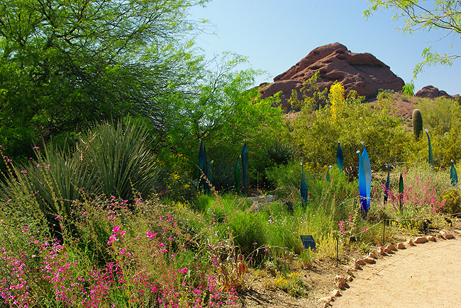 Ordinaire Artist Dale Chihulyu0027s Work Is Included In More Than 200 Museums Worldwide.  Here At The Desert Botanical Garden In Phoenix ...