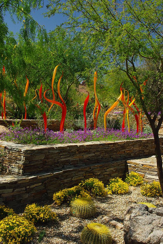 Ботанический Сад Пустыни, Феникс, штат Аризона США