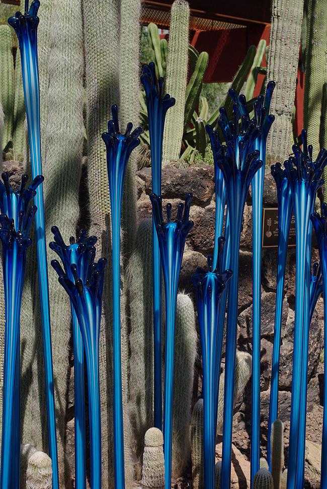 Феникс - Ботанический Сад Пустыни