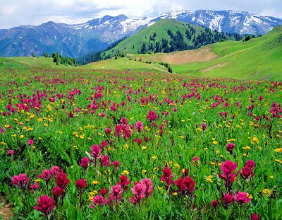 3b3fbf6ef 2019 Crested Butte Wildflower Festival Independent Tour