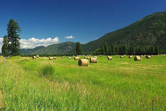 Montana Scenery With Horses - wallpaper.