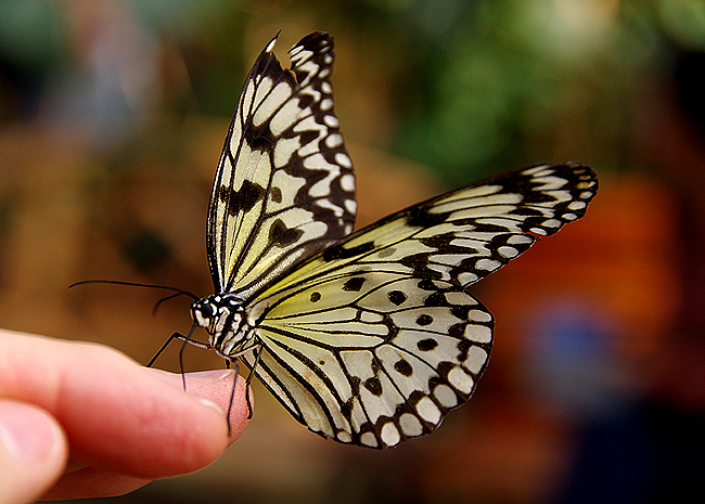 Magic Wings Butterfly Conservatory 2015