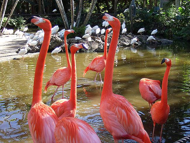 Ruby princess and the eastern caribbean - Flamingo gardens fort lauderdale ...